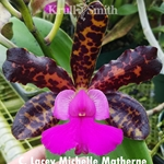 Cattleya Lacey Michelle Matherne